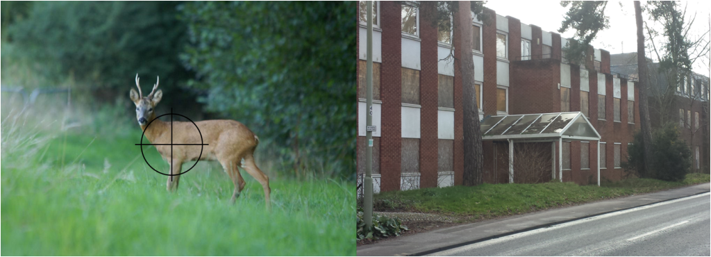 Which would you rather preserve - derelict eyesore or our wildlife?
