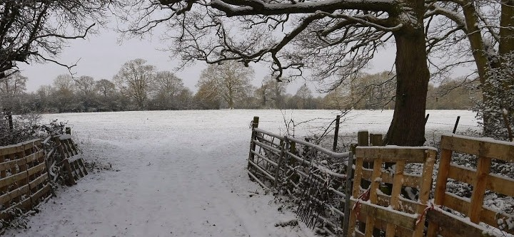 Winchfield Snow