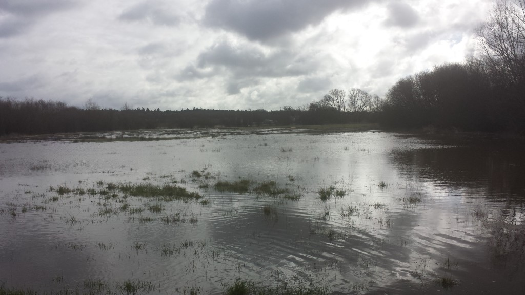 Flood Field near Pale Lane Winchfield 28 March 2016 #StormKatie Storm Katie.